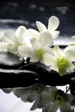 Zen Stones And Branch White Orchids With Reflection Fotografie-Druck von  crystalfoto