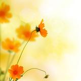 Beautiful Floral Border Fotografie-Druck von Subbotina Anna