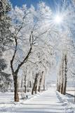 Beautiful Winter Landscape with Snow Covered Trees Lámina fotográfica por Leonid Tit