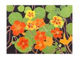 Nasturtiums Giclee Print by Sarah Gillard
