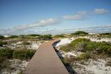 Sand Dunes Boardwalk Fotografie-Druck von  forestpath