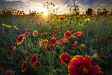 Breezy Dawn over Texas Wildflowers Fotografie-Druck von Dean Fikar