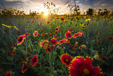 Breezy Dawn over Texas Wildflowers Stampa fotografica di Dean Fikar