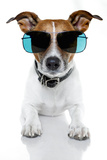 Dog with Funny Shades Valokuvavedos tekijänä Javier Brosch