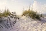 Peaceful Morning in the Beach Sand Dunes Fotografie-Druck von  forestpath