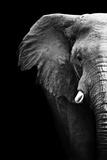 Artistic Black And White Elephant Affiches par  Donvanstaden