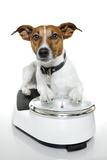 Dog on Scale Valokuvavedos tekijänä Javier Brosch