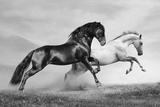 Horses Run Poster von  mari_art