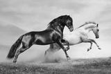Horses Run Poster di  mari_art