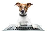 Dog Computer Pc Tablet Valokuvavedos tekijänä Javier Brosch