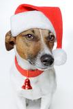 Santa Dog Valokuvavedos tekijänä Javier Brosch