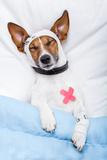 Sick Dog with Bandages Lying on Bed Valokuvavedos tekijänä Javier Brosch