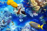 Underwater World with Corals and Tropical Fish. Fotoprint van Brian K
