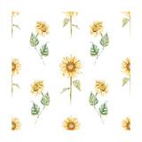 Watercolor Sunflower Pattern Premium Giclee Print by  Zenina