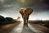 Walking Elephant Fotografie-Druck von  ccaetano