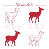 Venison Meat Cut Diagram Scheme Poster von  ONiONAstudio