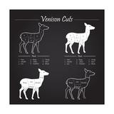 Venison Meat Cut Diagram Scheme Kunstdrucke von  ONiONAstudio