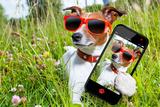 Selfie Dog in Meadow Valokuvavedos tekijänä Javier Brosch