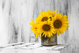 Background Still Life Flower Sunflower Wooden White Vintage Fotografie-Druck von  FOTOALOJA