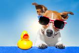 Summer Holiday Dog Valokuvavedos tekijänä Javier Brosch