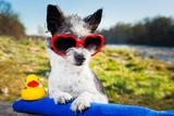 Summer Love Dog Valokuvavedos tekijänä Javier Brosch