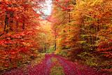 Magnificent Autumn Colors Forest in October Fotografie-Druck von  Fotozickie