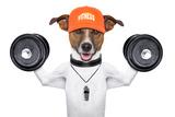 Fitness Dog Fotografie-Druck von Javier Brosch