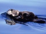 Sea Otter with Offspring Fotografie-Druck von Lynn M. Stone