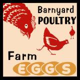 Hühner auf dem Bauernhof– Eier vom Bauernhof Kunstdrucke