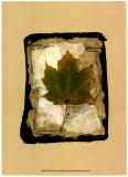 Kyoto Leaves V Posters af Kate Archie