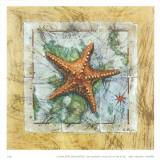 Seestern Kunstdrucke von A. Vega