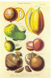 History of the Vegetable Kingdom I Posters by William Rhind
