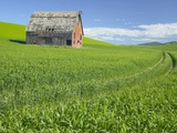 Barn and Vehicle Tracks in Wheat Field in Idaho Photographic Print by Darrell Gulin