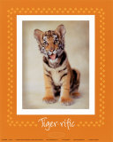 Tiger-ific Posters by Rachael Hale