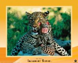 Leopardo de safari imaginario Pósters por Tom Arma