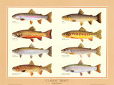 Classic Trout Prints by Joseph Tomelleri