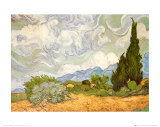 Wheatfield with Cypresses, c.1889 Poster by Vincent van Gogh