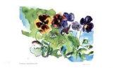 Spring Garden / Pansies