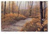 Maple Forest Sammlerdrucke von J. Vanderbrink