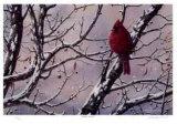 Winter Arrival Sammlerdrucke von J. Vanderbrink