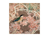 Lifespring - Japanese Blue-winged Pitta Giclee Print by Minrong Wu