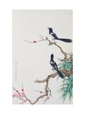Happy Birds in Plum Tree Giclee Print by Hsi-Tsun Chang