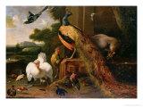 Revolt in the Poultry Coup Giclée-tryk af Melchior de Hondecoeter