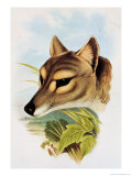 Tasmanian Wolf or Tiger (Thylacinus Cynocephalus) Giclee Print by Henry Constantine Richter