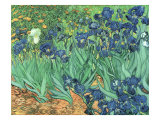 Irises, 1889 Giclée-tryk af Vincent van Gogh
