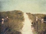 Beach Trail Photographic Print by Jennifer Kennard