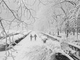 Couple Walking Through Park in Snow Fotografie-Druck von  Bettmann