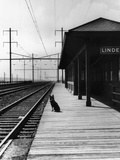 Dog Waiting at Empty Railroad Platform Lámina fotográfica