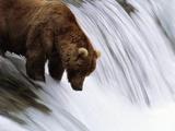 Brown Bear Fishing at Brooks Falls Fotografie-Druck von Jeff Vanuga