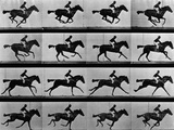 Jinete sobre caballo al galope Lámina fotográfica